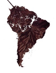 Deforestation in South America. Stop killing mother nature!