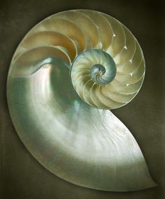 Sea Shells ~ Natures shell structure