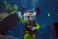 Disney Parks, Walt Disney World, All Disney Characters, Mickey Mouse Pictures, Tokyo Disneyland, Disney Mickey Mouse, Seasons, Summer, Fun