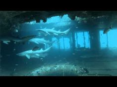 ▶ Aeolus Wreck Dive With Sand Tiger Sharks - YouTube.  Located off of North Carolina coast.