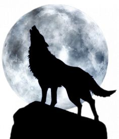I don't know what is more pretty: the moon or the wolf.ok, obviously the wolf! Wolf Silhouette, Wolf Love, Wolf Tattoos, Tattoos Of Wolves, Wolf Spirit, Spirit Animal, Beautiful Creatures, Animals Beautiful, Tier Wolf