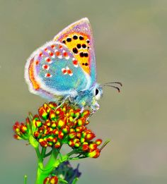 Types of Butterflies - Butterflies are one of the most adored insects for their enchanted beauty and representation of good luck and positive change. Butterfly Kisses, Butterfly Flowers, Butterfly Wings, Butterfly Pictures, Types Of Butterflies, Butterflies Flying, Beautiful Creatures, Animals Beautiful, Cute Animals