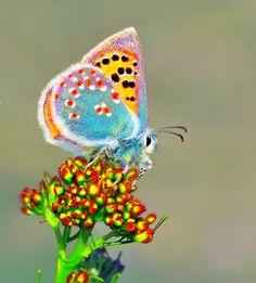 Hairstreak butterfly...