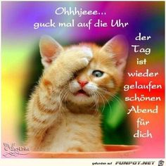Best cute kittens videos compilation new (most funny) - funny kitten videos Funny Animal Memes, Funny Animal Videos, Videos Funny, Cat Memes, Funny Animals, Cute Kitten Gif, Cute Kittens, Cats And Kittens, Beautiful Kittens