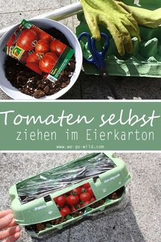 Tomaten selber ziehen im Eierkarton Gewächshaus Planting tomatoes is great because it is not difficult. To make things even easier you can make yourself a small DIY greenhouse for tomatoes from egg cartons. Let's start with growing the tomato. Growing Tomatoes, Growing Herbs, Growing Vegetables, Greenhouse Tomatoes, Greenhouse Gardening, Greenhouse Growing, Kitchen Gardening, Tomato Cultivation, Culture Tomate
