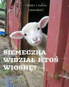 Baby Lamb Farm Animals Cute Pictures At the beginning when he was fed lamb. Part 1 Funny Animal Memes, Funny Animal Pictures, Cute Pictures, Funny Animals, Funny Memes, Funny Easter Memes, Hilarious Pictures, Animal Quotes, Funny Chicken Memes