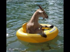 Whatever floats your goat! lol