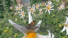 How to choose the best flowers for pollinators, why flat flowers like Yarrow and Sedum are so useful for them, the fragrances that they love, the colours that they can see and the native plants that encourage them most. Farm Pictures, Garden Pictures, Diy Garden Decor, Garden Ideas, Sustainable Gardening, Sensory Garden, Garden Planner, Veg Garden, Bugs And Insects