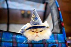 This kitty's been at Hogwarts for far too long...