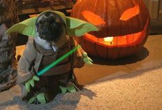 divertido disfraz de un perro disfrazado de yoda de star wars