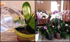 Ráöntöttem az orchideámra ezt a házi oldatot, 10 nap múlva így találtam őket! Döbbenet! Cactus, Garden, Succulents, Plant, Garten, Lawn And Garden, Gardens, Gardening, Outdoor