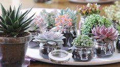 Il existe environ 12 000 espèces différentes de plantes succulentes. Parmi  elles, le cactus est sans doute la plus connue.