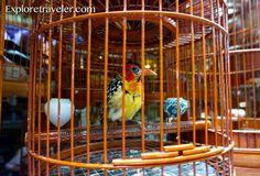 Photo of the day – Yuen Po Bird Garden, Hong Kong Yuen Po Bird Garden keeps with the traditional culture of songbird keeping in Hong Kong #adventure #asia #bucketlist