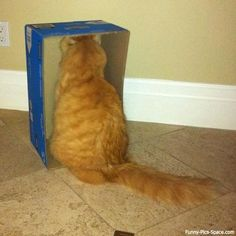 Thinking inside the box.........