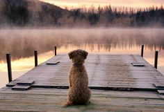 Waiting for you #Dog #Puppy