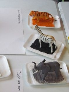 """For one of our last activities we did in our """"not-alike"""" unit, we had fun painting with animal tracks... I selected several toy animals that had different shapes of feet and that were different colors. I decided to add the color element to"""