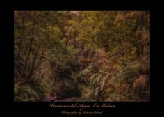 Barranco de Lagua - Auf diesem Bild sieht man einmal wie die Wanderwege auf La Palma zum Teil durch einen Urwald führen. sehr beeindruckend. Explore, Painting, Art, Canary Islands, Hiking Trails, Hiking, Pictures, Art Background, Painting Art