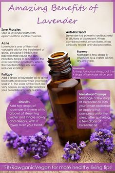 RawganicVegan - Amazing benefits of Lavender: We use lavender almost daily. We put a few drops (food grade) in our fresh lemon water, we diffuse it in the yoga room, we use it topically on cuts, scrapes and bruises, and diffuse it for our children at night in their bedrooms to promote relaxation. DEFINITELY one oil to have in every home!