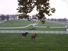 Kentucky - Kentucky Horse Park in Lexington KY by Lizette Fitzpatrick, www.lizette.us