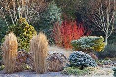 Winter Plants, Winter Garden, Landscape Design, Garden Design, Garden Cottage, Garden Pictures, Garden Photos, Front Yard Landscaping, Landscaping Ideas