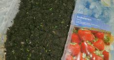 Erdbeeren aussäen  ist eine etwas unpopuläre Entscheidung bei der Neuanlage eines Gartenbeetes. Meist werden Erdbeeren aus Ablegern vermehrt...