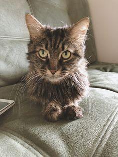 Мой кот Аксель.