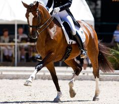 """Develop the Extended Trot   By Arlene """"Tuny"""" Page With Kitson Jazynka  How to develop the extended trot in the dressage horse. - See more at: http://dressagetoday.com/article/extended-trot-12522?utm_source=DressageTodayNL&utm_medium=email&utm_campaign=Newsletter#sthash.eyAFOySC.dpuf"""