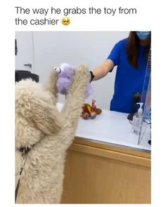 Cute Funny Dogs, Funny Dog Memes, Funny Dog Videos, Cute Funny Animals, Hilarious Sayings, Dog Humor, 9gag Funny, Memes Humor, Funny Signs