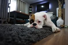 How to Help Your Dog Adjust to Apartment Living