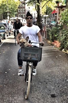 Cycle city tour trough Amsterdam with my french bulldog and London man. Melting heart | Shared from http://hikebike.net