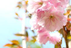 Six Ways to Celebrate May Day
