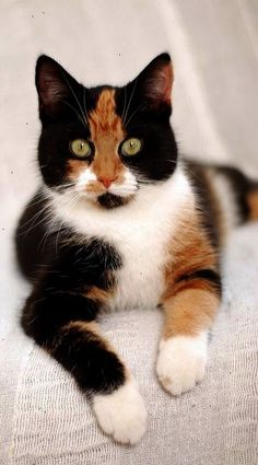 \Cats invented self-esteem. There's not an insecure bone in their bodies.\ --Erma Bombeck