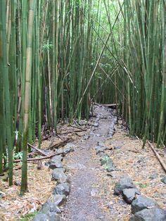 Trekking through the bamboo forest in the Kipahulu area of Haleakala National Park on Maui Hawaii Honeymoon, Aloha Hawaii, Hawaii Usa, Beautiful Islands, Beautiful Places, Amazing Places, Bamboo Forest Maui, Hawaiian Homes, Maui Travel