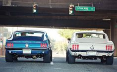 Pair of Ford Mustang fastbacks (blue 1967 and white 1968) ugh want the blue one so bad