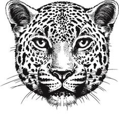 Black And White Vector Sketch Of A Leopard& Face - 168267392 : Shutterstock Jaguar Tattoo, Leopard Tattoos, Cheetah Drawing, Vektor Muster, Cheetah Face, Tiger Face, Face Sketch, Animal Faces, Leopards