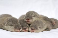 Otters. oh em gee. I love otters. I want an otter pond in my future backyard.