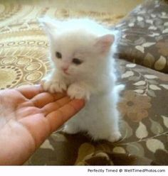 Cute kitten has its first walk – Even kittens want to learn to walk. This adoarble kitten needs your helping hands to help it learn.
