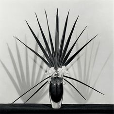 Robert Mapplethorpe :: Orchid with Palmetto Leaf, 1982