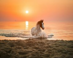 #horse #beach #sunset