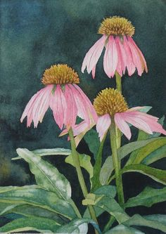 http://images.fineartamerica.com/images-medium-large/coneflowers-vicki-greene.jpg