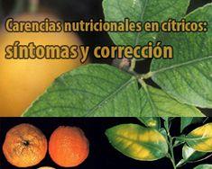 Carencias nutricionales en citricos-sintomas y correccion