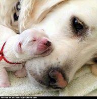 Pasgeboren puppy
