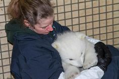 Kali the Orphaned Polar Bear Settles in at the Alaska Zoo