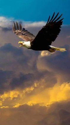 necesitan donde falta hago no me noDonde no me necesitan no hago falta is part of Eagle - Eagle Images, Eagle Pictures, Bird Pictures, Nature Pictures, Nature Animals, Animals And Pets, Beautiful Birds, Animals Beautiful, Vogel Gif