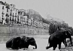 Elefants refrescantse a Balaguer