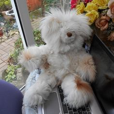 Alpaca Teddy Bear,  Collectable. From Peru South America