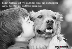 10 Genius Ways To Get Rid of Your Dog's Terrible Breath, puppy training, golden retriever training All Dogs, Best Dogs, Otto Von Bismarck, Golden Retriever, Dog Quotes, New Puppy, Asthma, Dog Days, Dog Cat