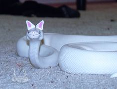 Snakes In Hats Are Actually Very Cute (Pics) - World's largest collection of cat memes and other animals Snakes With Hats, Baby Snakes, Pretty Snakes, Beautiful Snakes, Cute Little Animals, Cute Funny Animals, Funny Animal Pictures, Cute Pictures, Cute Pics