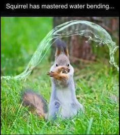 Funny Animal Pictures Of The Day – 24 Pics                                                                                                                                                                                 Mehr