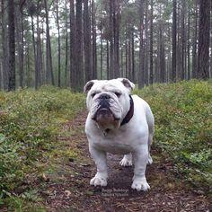 (4) Baggy Bulldogs - Baggy Bulldogs's Photos